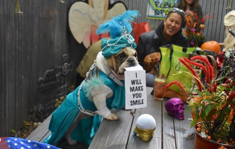Halloween Dog Parade Back on in Tompkins Square Park