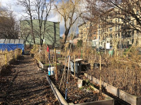 Local garden waits for spring as it has for three decades. (Hannah Gonzalez/The Fordham Ram)